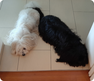 Ruths Hunde